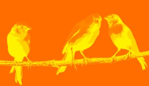 3 yellow canaries gradient 2